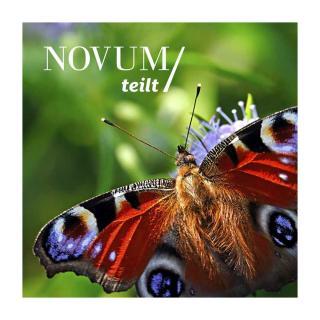 25 m² Bienen-Blühfläche