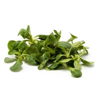 Salat Feldsalat