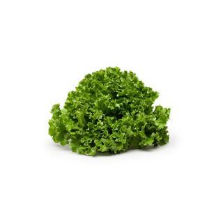 Salat Eichblatt grün