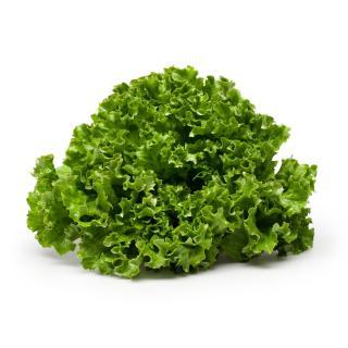 Salat Batavia grün