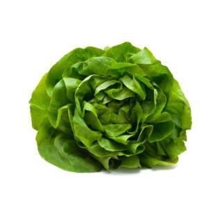 Salat Kopfsalat grün